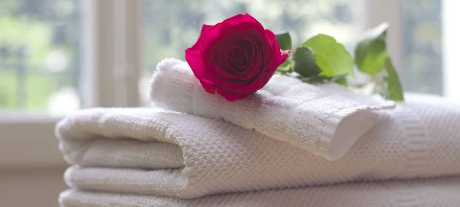 A red rose in fluu bloom rests on a pile of clean white folded towels.