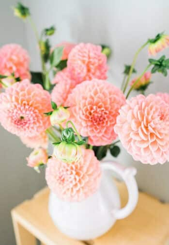 A white pitcher filled with exuberant peach flowers on a wooden crate table.